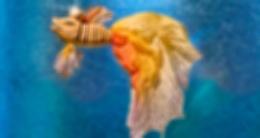Спектакль «Сказка о рыбаке и рыбке»