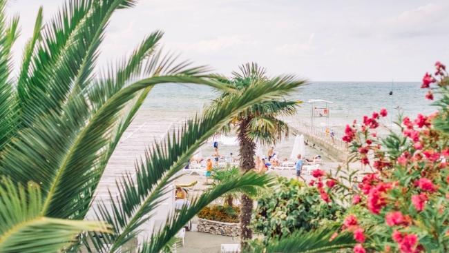 Чем заняться в Сочи в августе: фестиваль «Новая волна», концерт «Любэ», шоу с дельфинами и многое другое